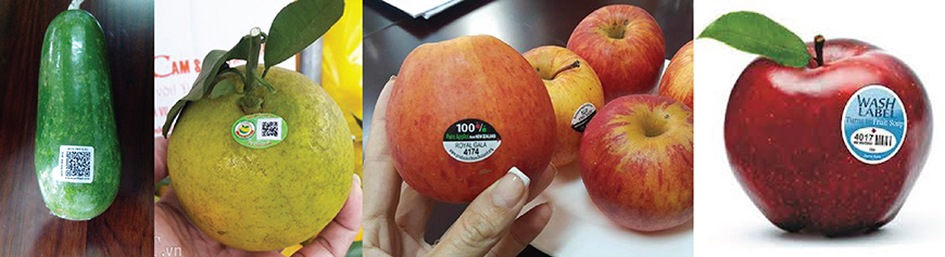 in decal nhựa dán trái cây