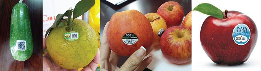in tem nhãn dán trái cây giá rẻ